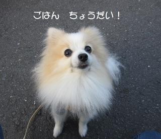 IMG_0373.JPG