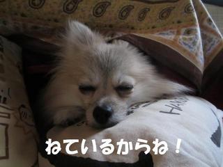 IMG_3075.JPG
