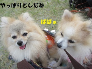 IMG_8196.JPG