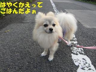 photo 008.jpg