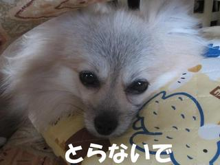 photo 009.jpg
