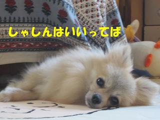 photo 010.jpg