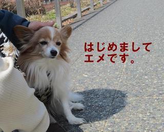 photo 019.jpg