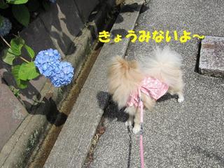 photo 026.jpg