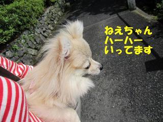 photo 057.jpg