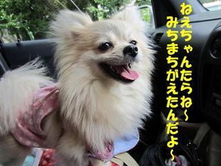 photo 079.jpg