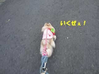photo 089.jpg
