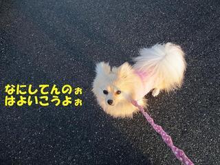 photo 142.jpg