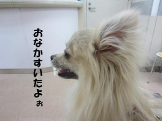 photo 235.jpg