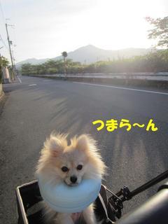 photo 387.jpg
